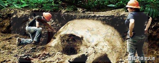 巨人骨骸有实物展示吗